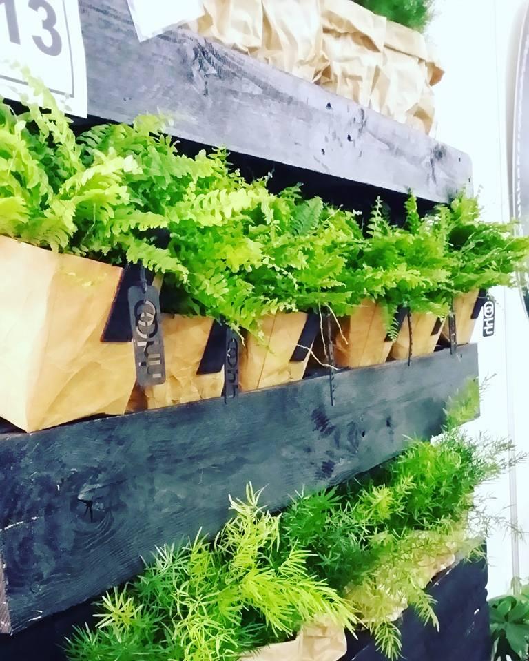 viherkasvit Kukkakauppa Bronco Turku