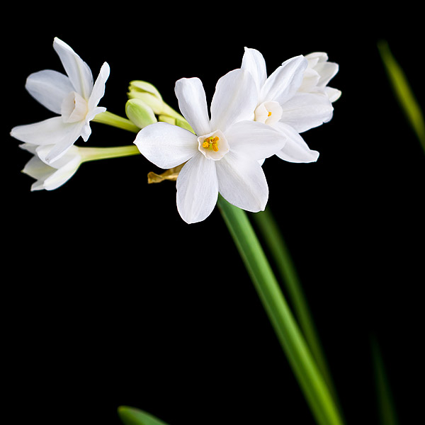 kukkien surusidonta