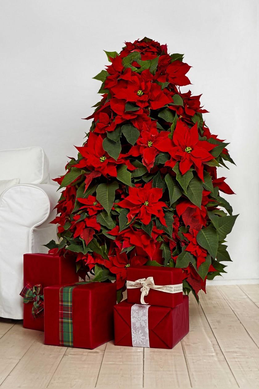 Joulu on jo ovella...